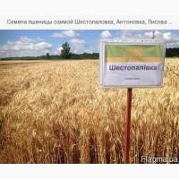 Продам пшеницу Шестопаловка, Антоновка, Лисова Писня
