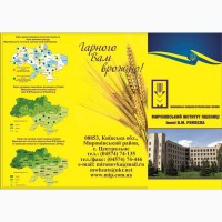 Реалізуємо пшеницю від виробника (третікале, ячмінь, яра пшениця)