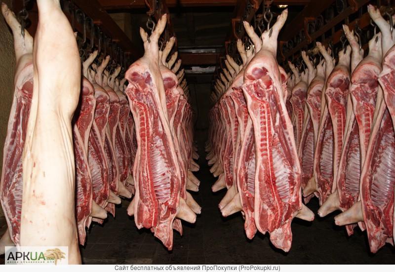 Свинина в тушах и полутушах цена