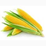 Семена кукурузы Даниил Украина