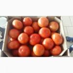 Продам помидор тепличный (Украина) оптом