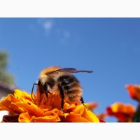 Закуповуємо мед. Новоукраїнка, Помічна і інші райони Кіровоградської обл
