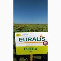 Гибрид подсолнечника Евралис EC Белла (Euralis Bella), Днепропетровская обл