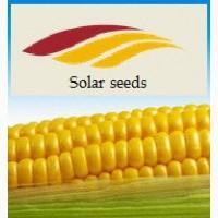 Урожайная кукуруза французской селекции Ален (фао-250), Элисон(фао-290), Ирис(фао-320)