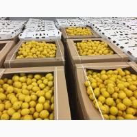 Лимон (Египет)