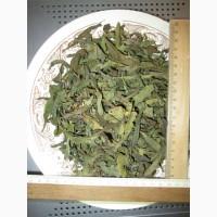 Иван чай лист цельный зелёный, кипрей, Epilobium angustifolium, Карпат, высокогорный, эко