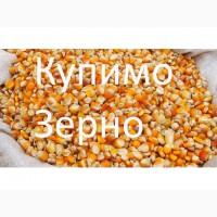 Куплю кукурудзу, протравлену, червону та прострочене насіння кукурудзи