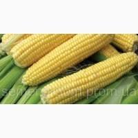 Продам супер сладкую кукурузу оптом