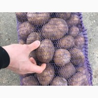 Продам Картошку Семенную и продовольственную Рэд леди, Бриз, Гала, Сантэ, Манифест ОПТ