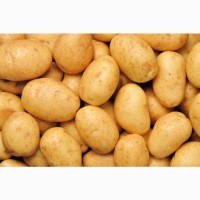 Покупаем картофель от 20 тонн по Киевской области. Самовывоз