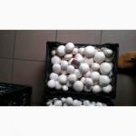 Продам грибы шампиньоны опт, доставка