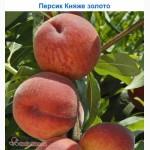 Саджанці персиків