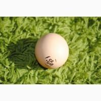 Кобб 500, купити інкубаційні яйця бройлера