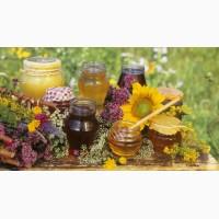 Куплю мед. Актуальні ціни