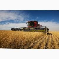 Покупаем пшеницу.Возможен самовывоз