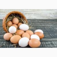 Яйцо куриное столовое, яичный порошок Днепр