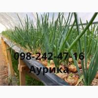 Продажа зеленый лук (перо), лук штутгарт