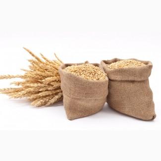 Елітне насіння пшениці в мішках по 50кг