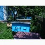 Продам 50 бджолопакети (дадани) Вінниця