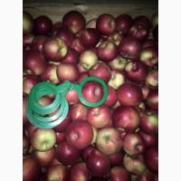 Продам оптом яблука зі сховища. В наявности 10 сортів. Фото реальні. Дзвоніть