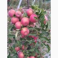 Продам яблука різних сортів деталі за телефоном