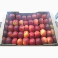 Продам яблоки зимних сортов из холодильника оптом
