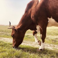 Мясной мир закупает говядину в Донецкой области