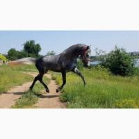 Орловский рысак, прогулочно-походный конь, лошадь