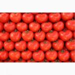 Закупим томат