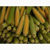 Закупка кукурузы.Оптом