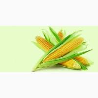 Производим закупку Кукурузы по Хорошей Цене, на всей территории Украины