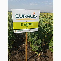 Продам семена подсолнечника ЕС АМИС ( Евралис) 2015 г