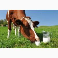 Продам молоко класса экстра от 100 л