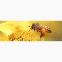 Продам пчели высокои якости