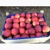 Продам яблоки со склада в наличии: голден делишес, айдаред, флорина, джонаголд