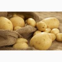 Куплю картофель оптом
