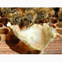 Пчелиное маточное молочко нативное натуральное, гарантия качества, доставка по Украине