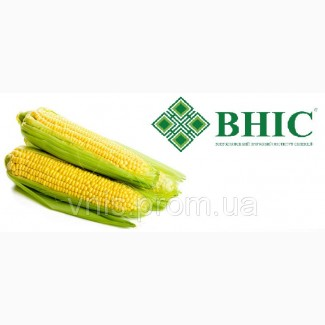 ВНІС пропонує: Насіння кукурудзи ВН 63
