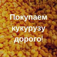 Купим кукурузу дорого