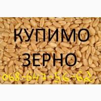 Купимо зерно: Пшениця, Кукурудза, Соя, Тритикал, Жито, відходи кукурудзи та пшениці