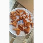 Принимаем заказы на заготовку грибов лисичку в любом виде и сморчок сухой