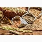 Закупка масличных и зерновых культур, Украина