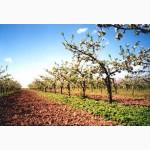 Візьму в оренду яблуневі сади