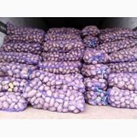 Продажа картофеля оптом