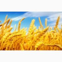 Приймаємо на постійній основі сільгосппродукцію ПШЕНИЦЮ по всім регіонам нашої країни