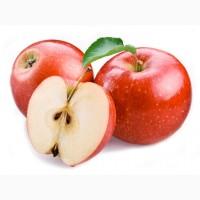 Покупаем яблоко оптом на постоянной основе