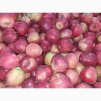 Продам яблоко на експорт с холодильника