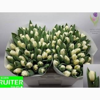 Tulip, Тюльпаны, ОПТ, к 8 Марта, Киев, Украина, до 8 березня
