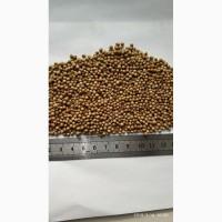 Продам семена кориандра, сорт Рамзес, засухоустойчевый