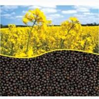 Закупаем крупным оптом масличные-Рапс